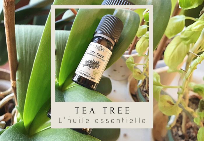 L'huile essentielle de tea tree : les bienfaits